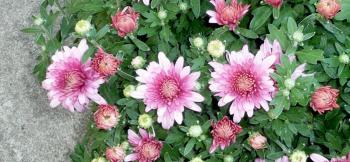 Sz裏庭花4