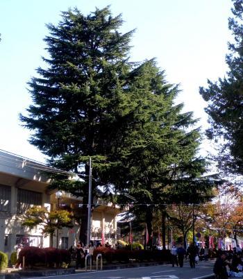 大産文祭11もみの木?