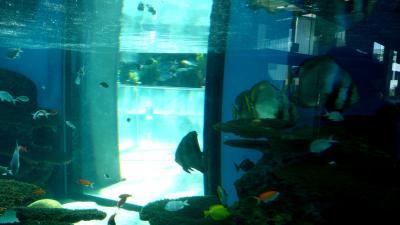 水遊園6透視水槽