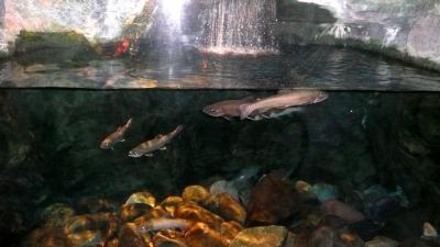 水遊園7魚1