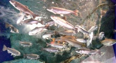 水遊園12魚6