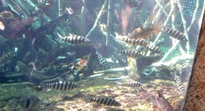 水遊園16魚10