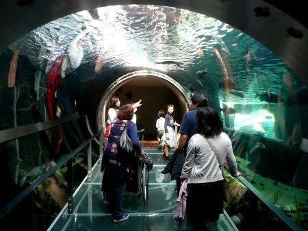 水遊園17水中トンネル1