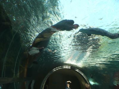 水遊園18水中トンネル2