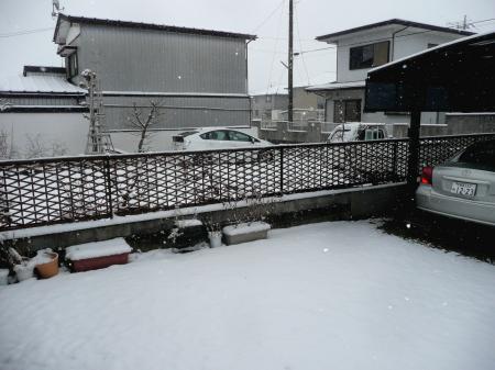雪2月6日庭1