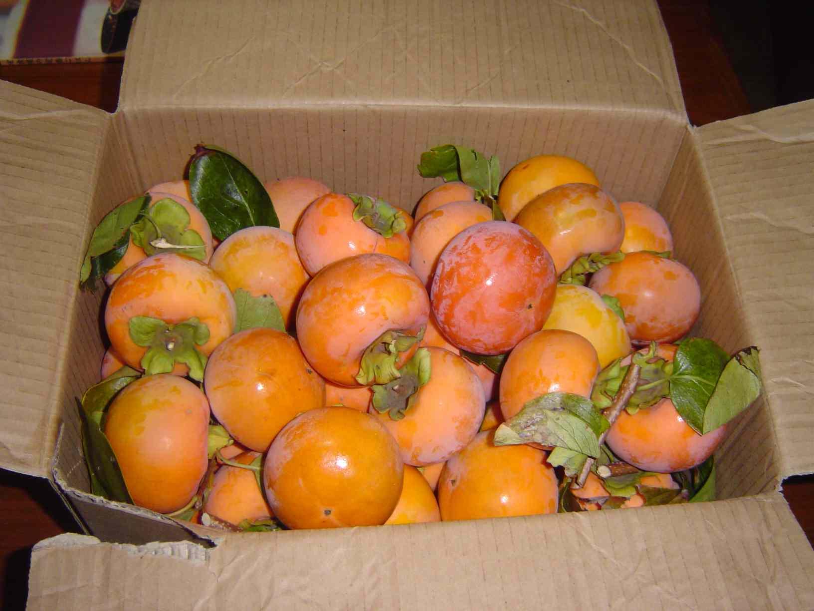 ダンボールイッパイの柿と