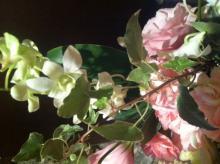 aroma-flower