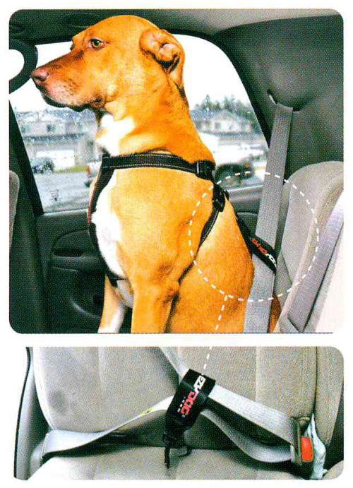 シートベルト装着例