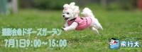 飛行犬バナー