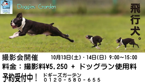 Oct飛行犬バナー