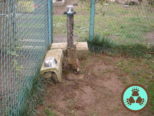 02小型犬水場施工前