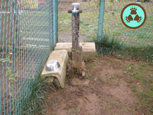 01小型犬エリア水場施工前