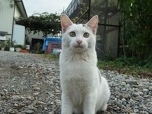 11-6猫2e