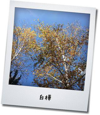 中尾山高原1