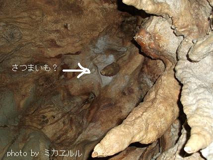 12.10.08龍河洞かDSCF0264