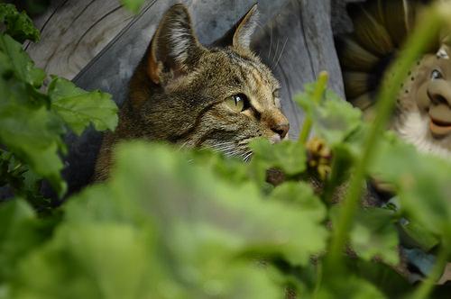 pp_spy_cat_green