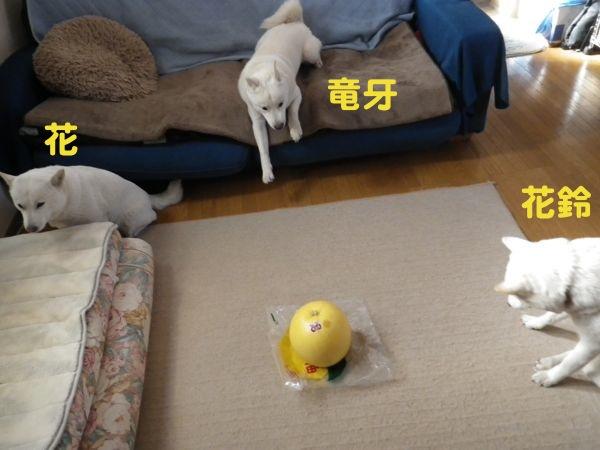 2014.1.17 晩白柚