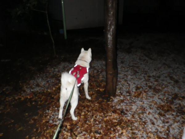 2014.2.4 雪ないよ~