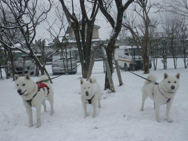 2014.2.8 雪だ〜