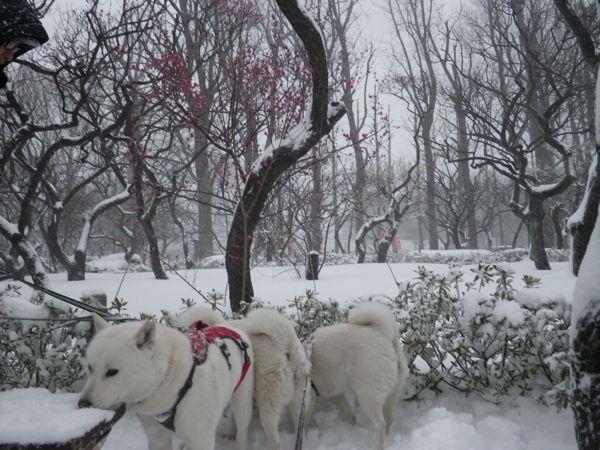 2014.2.8 午後の雪散歩6