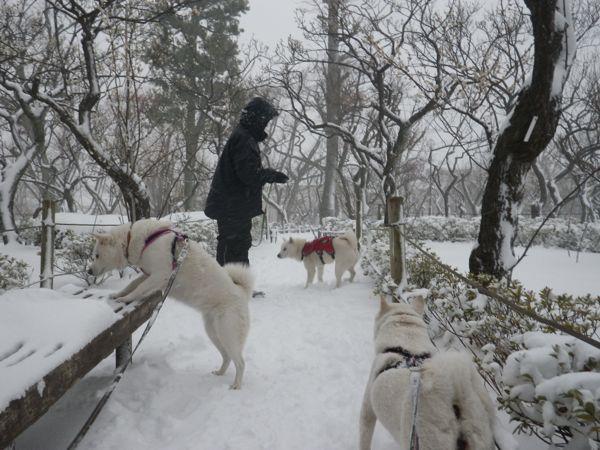 2014.2.8 午後の雪散歩5