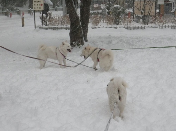 2014.2.8 午後の雪散歩4