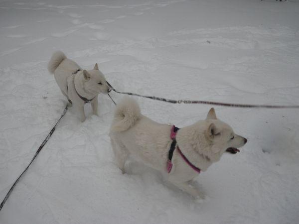 2014.2.8 午後の雪散歩3