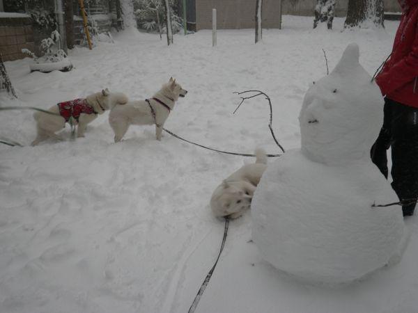 2014.2.8 午後の雪散歩2