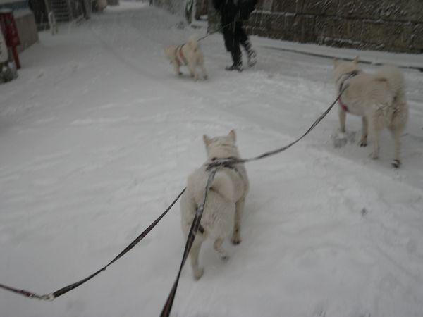 2014.2.8 午後の雪散歩1
