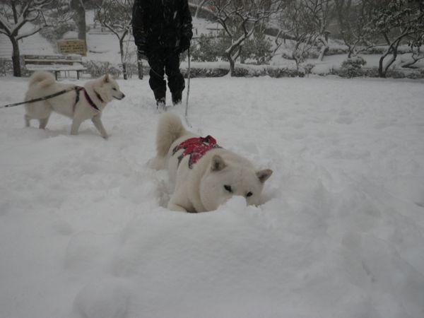 2014.2.8 午後の雪散歩8