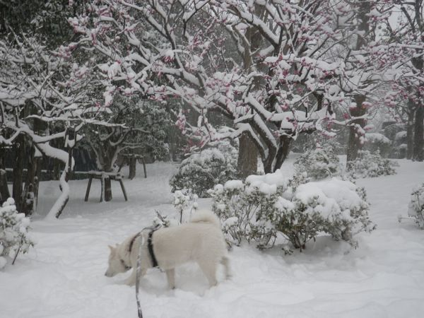 2014.2.8 午後の雪散歩7