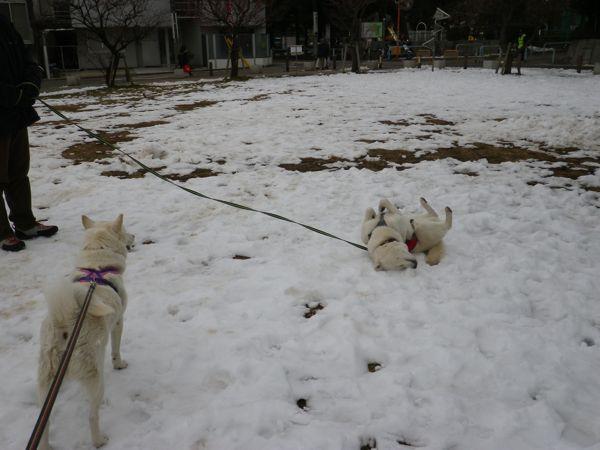 2014.2.11 残り雪で遊ぶ竜牙
