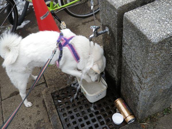 2014.2.11 寒くても水遊び…花鈴