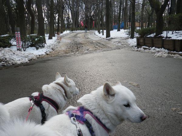 2014.2.10 羽根木公園1