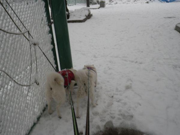 2014.2.14 二回目の大雪5