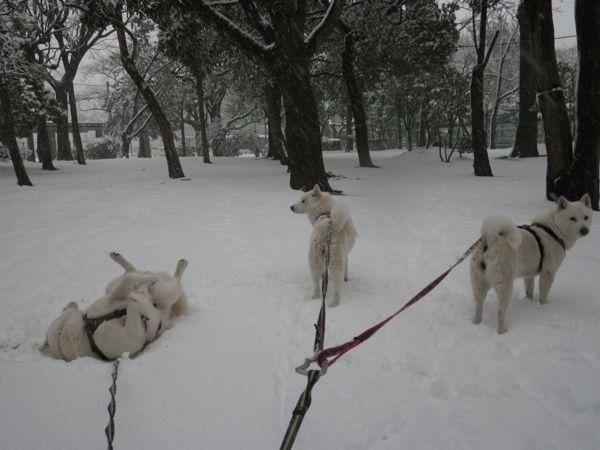 2014.2.14 二回目の大雪4