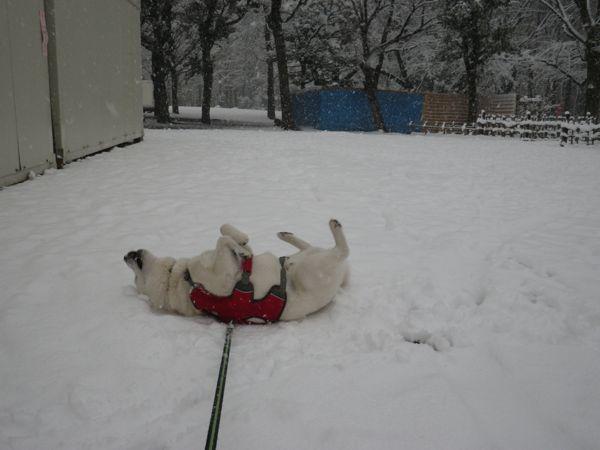 2014.2.14 二回目の大雪2