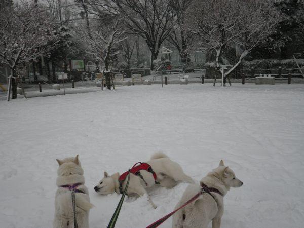 2014.2.14 二回目の大雪1