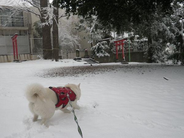 2014.2.14 二回目の大雪8