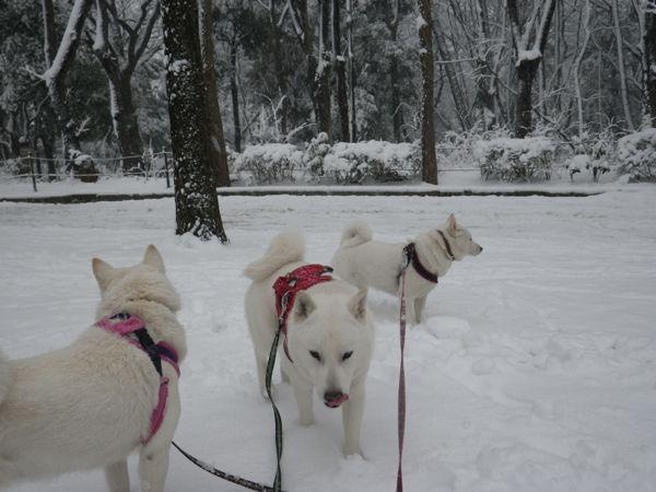 2014.2.14 二回目の大雪7