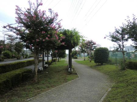 水と花と緑のこみち消防署付近
