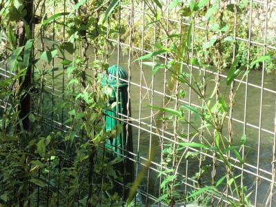 熊川分水取水口