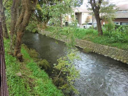 玉川上水残堀川伏越下流