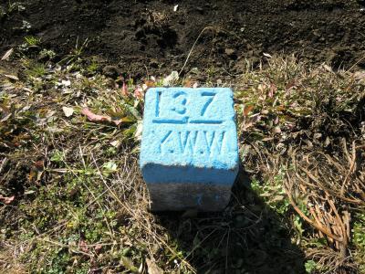 137Y.W.W杭