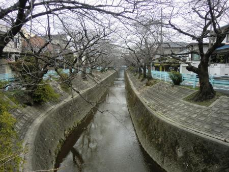 日岡橋から山崎川上流を望む