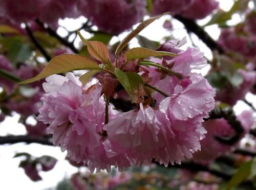 関山2012.05.01. 124