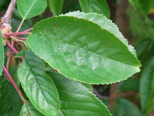 イギリスB2012.06 236 植栽g