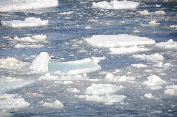 納沙布岬の流氷