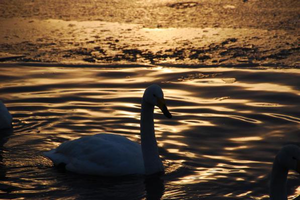 夕暮れの屈斜路湖