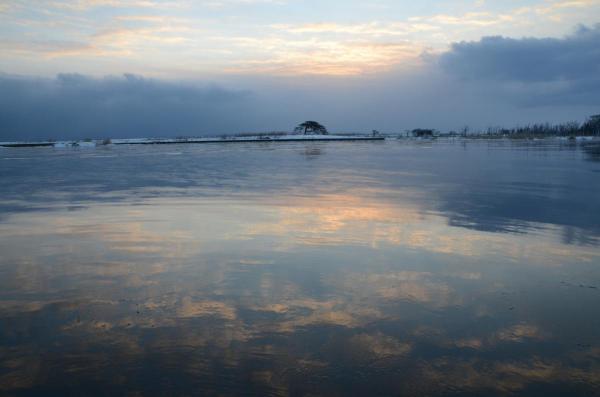 本別海の一本松